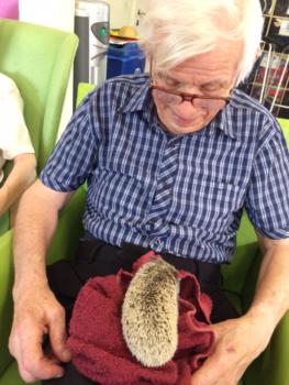 Animal visit